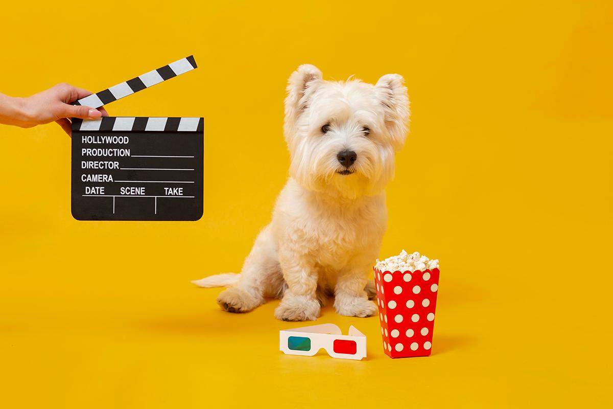 películas recomendadas para amantes de los animales